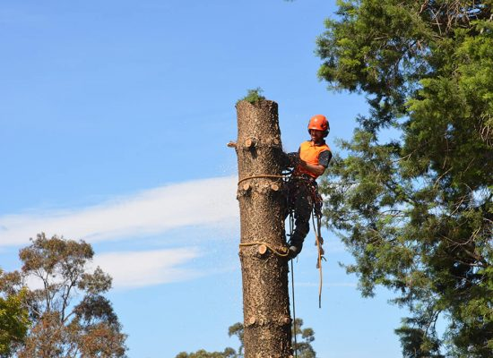 Tree cutting and stump grinding hills district