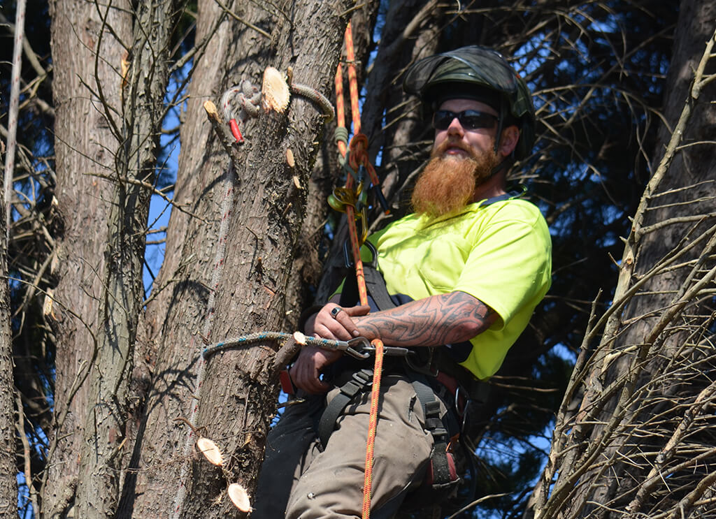 tree removal campbelltown