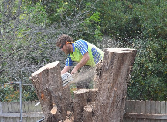 cheap tree removal sydney