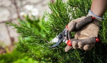 Sydney tree pruning service