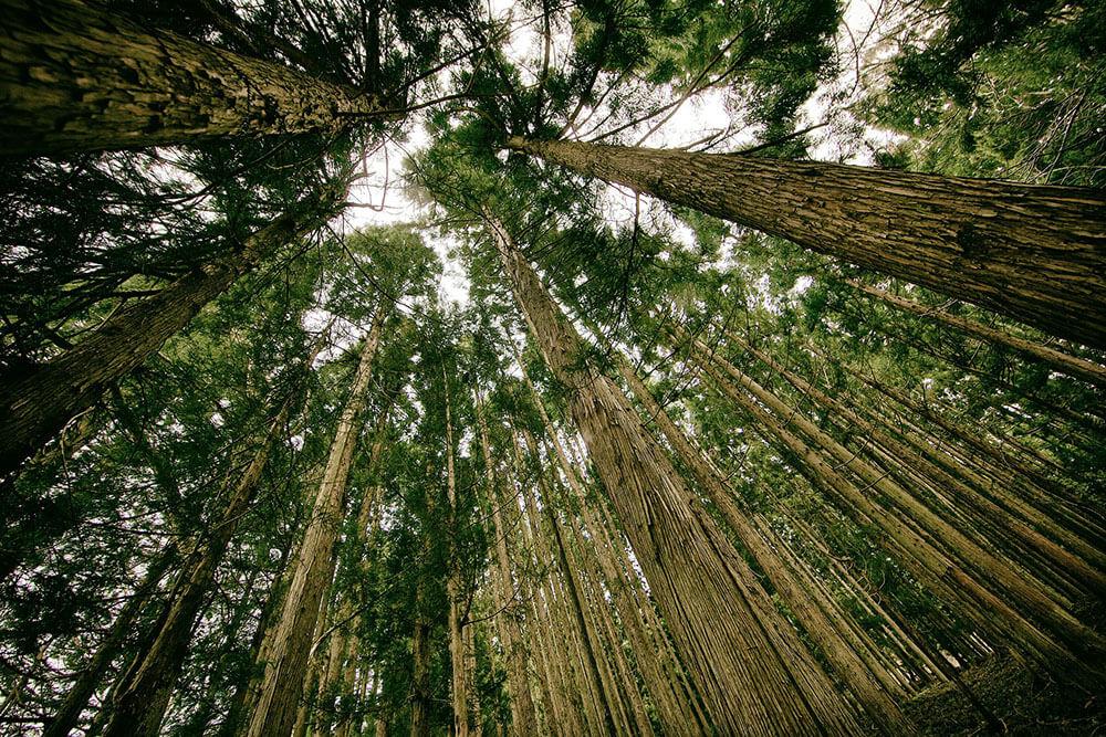 Best Tree Removal in Sydney's region