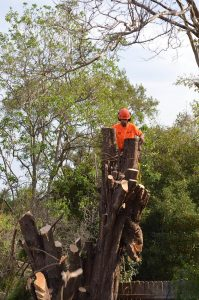 stump grinding, tree removal, tree pruning, tree cutting, tree lopping