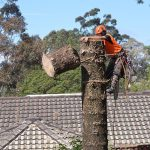tree removal Ryde