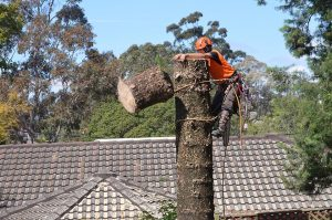 tree lopping tree cutting