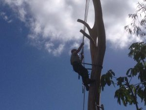 Most affordable tree removal service in Gladesville