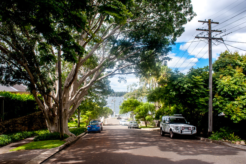At Your Tree Service, tree removal Hunters Hill, NSW