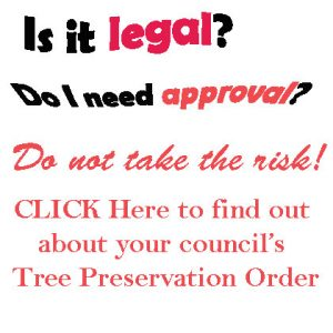 At Your Tree Service - Your council's Tree Preservation Order